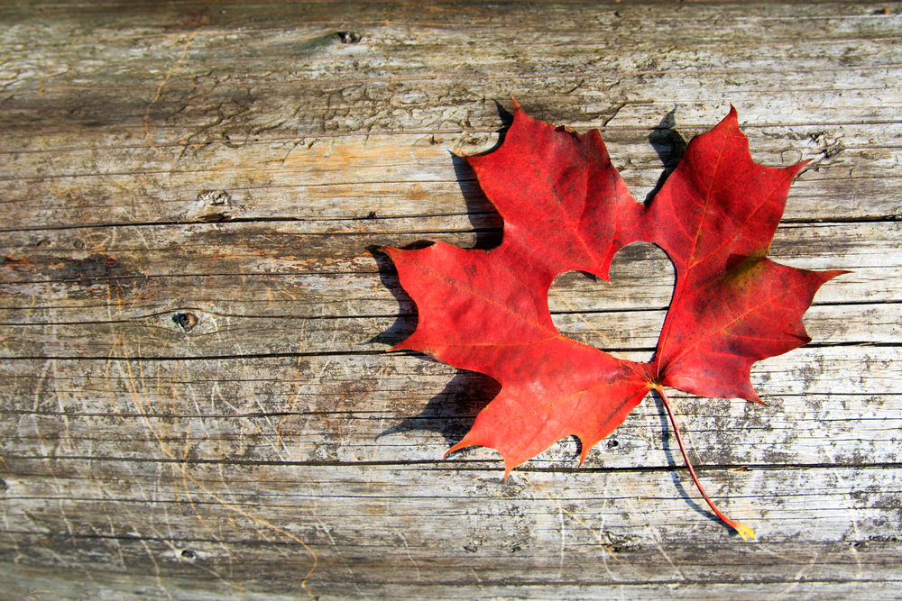 Red Maple Leaf In A Wooden Background